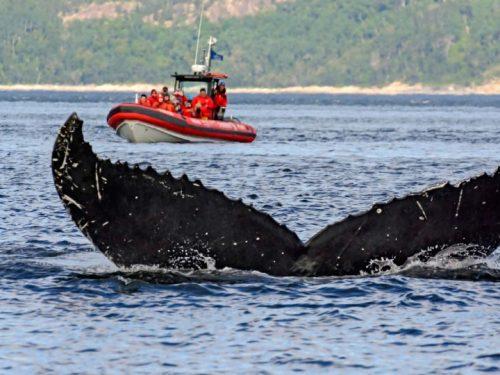 Essipit - Croisières aux baleines